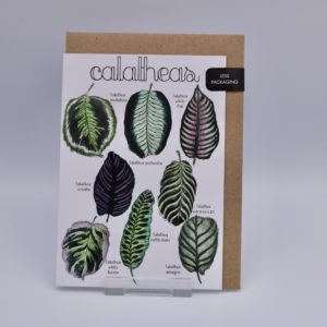 Majukoo card calatheas
