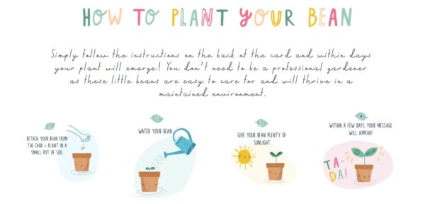 seed card instructions
